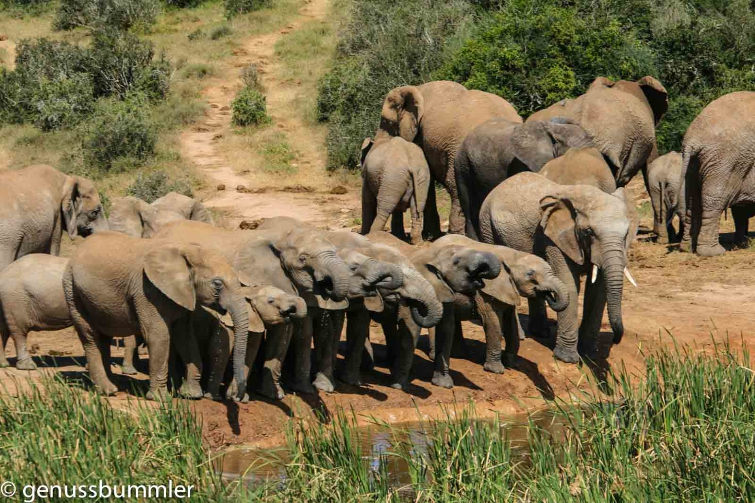 Addo Elephant Park Elefanten