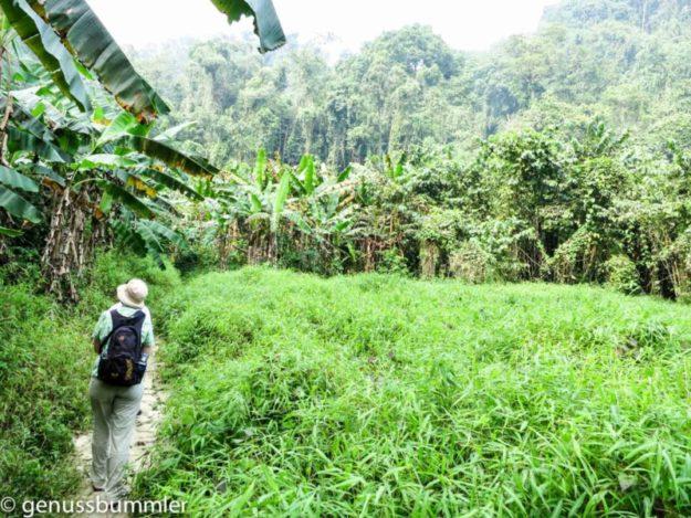 Cuc Phuong Nationalpark Dschungel