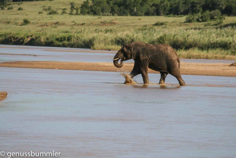 Hluhluwe imfolozi Park Elefant