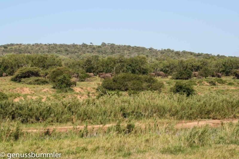 Hluhluwe imfolozi Park Elefantenherde