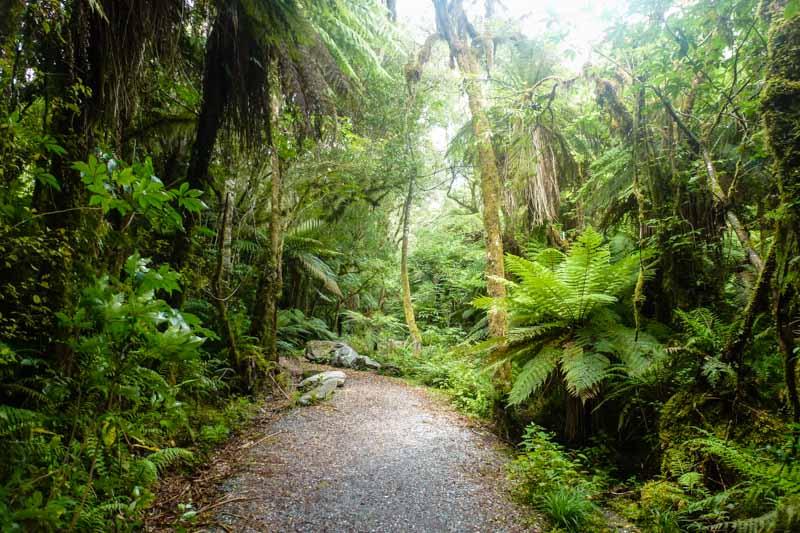 Neuseeland Urwald