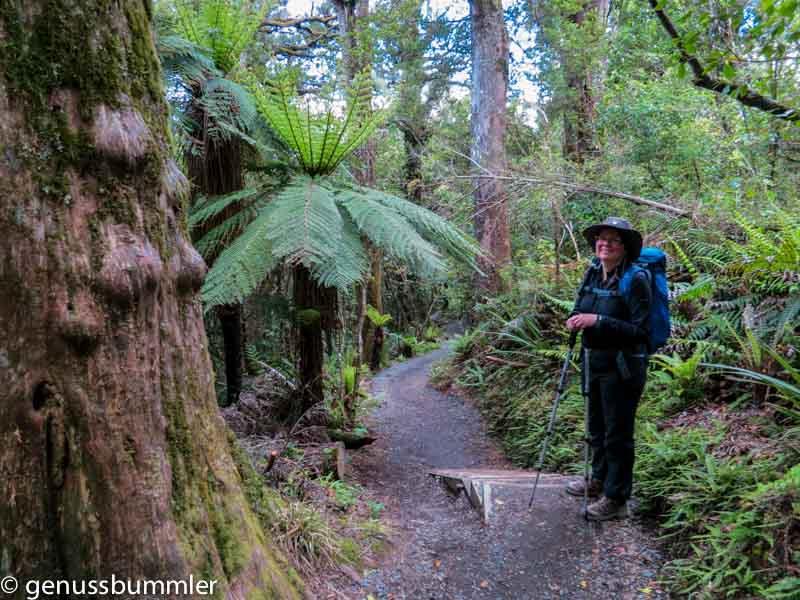 Tongariro Alpine Crossing Wald