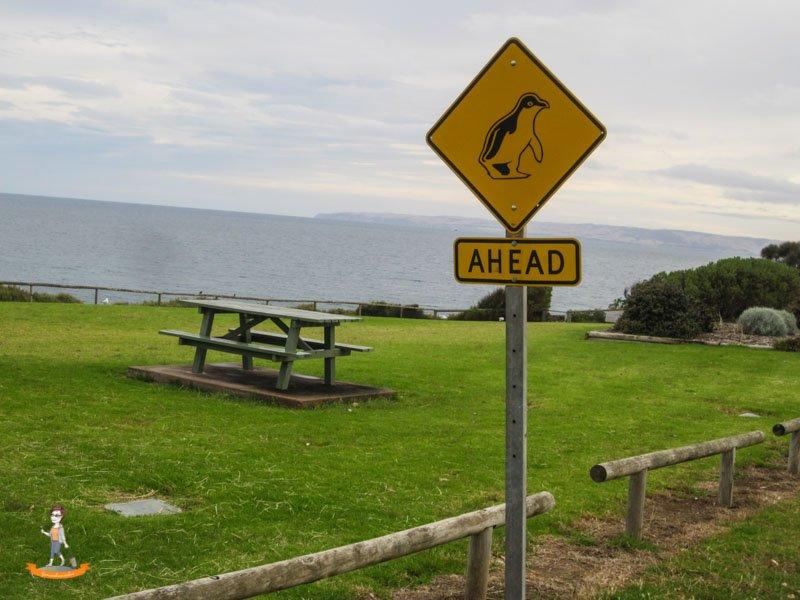 Kangaroo Island Australien Pinguin