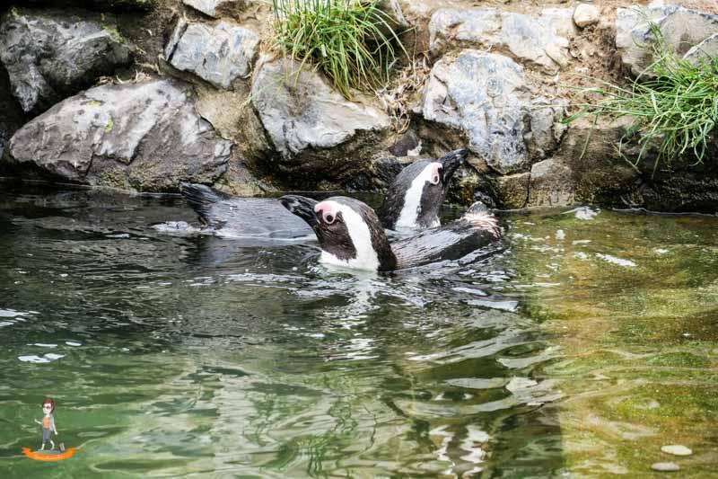 Burgers Zoo Arnheim Pinguin