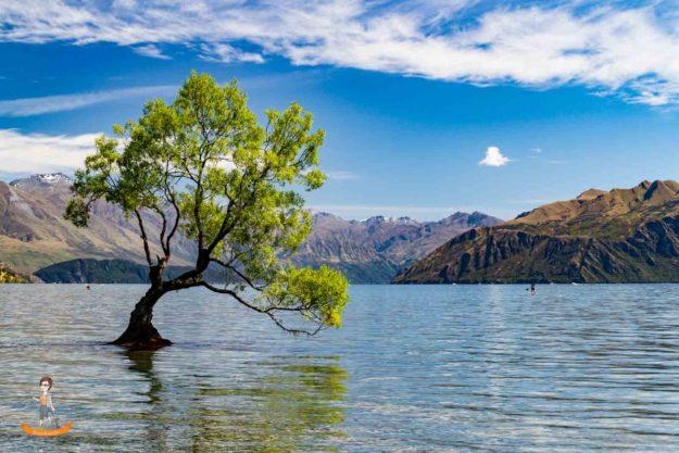 Neuseeland Wanaka Tree