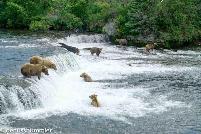 Brooks Falls NPS