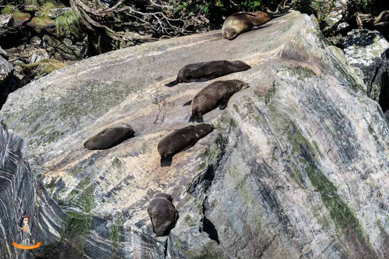 Milford Sound Schifffahrt Uebernachtung Robben