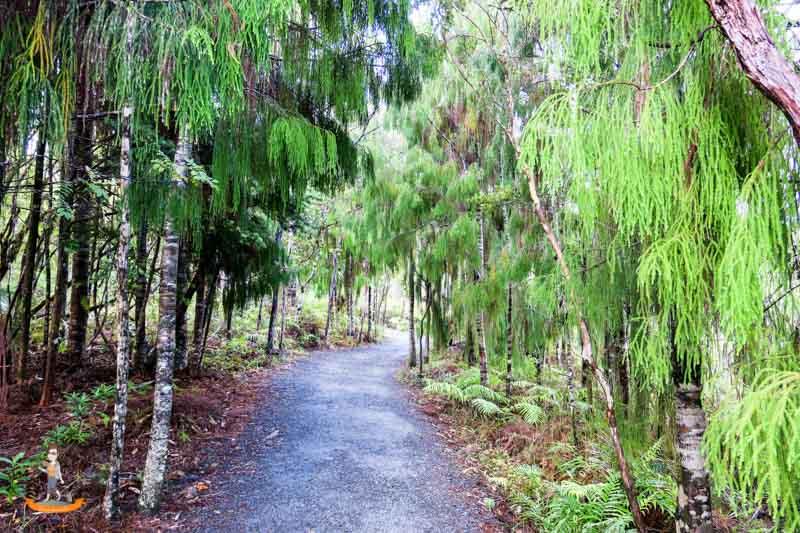 Northland von Neuseeland Kauri Coast