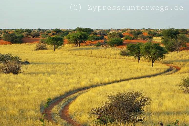 7 Reiseblogger verraten ihre Tipps für Namibia / Botswana 6