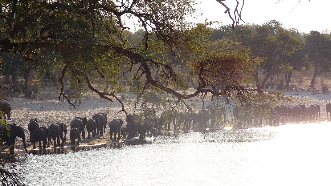 7 Reiseblogger verraten ihre Tipps für Namibia / Botswana
