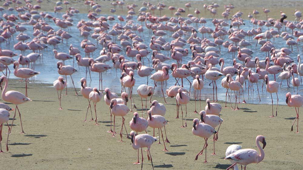 7 Reiseblogger verraten ihre Tipps für Namibia / Botswana 13