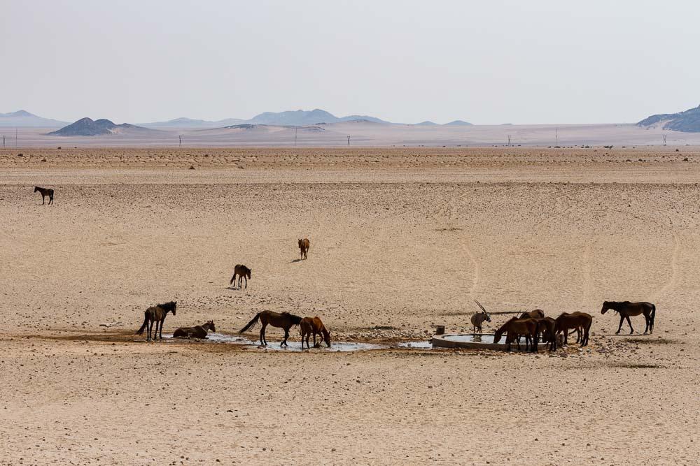 Namibia Garub Pferde Luederitz