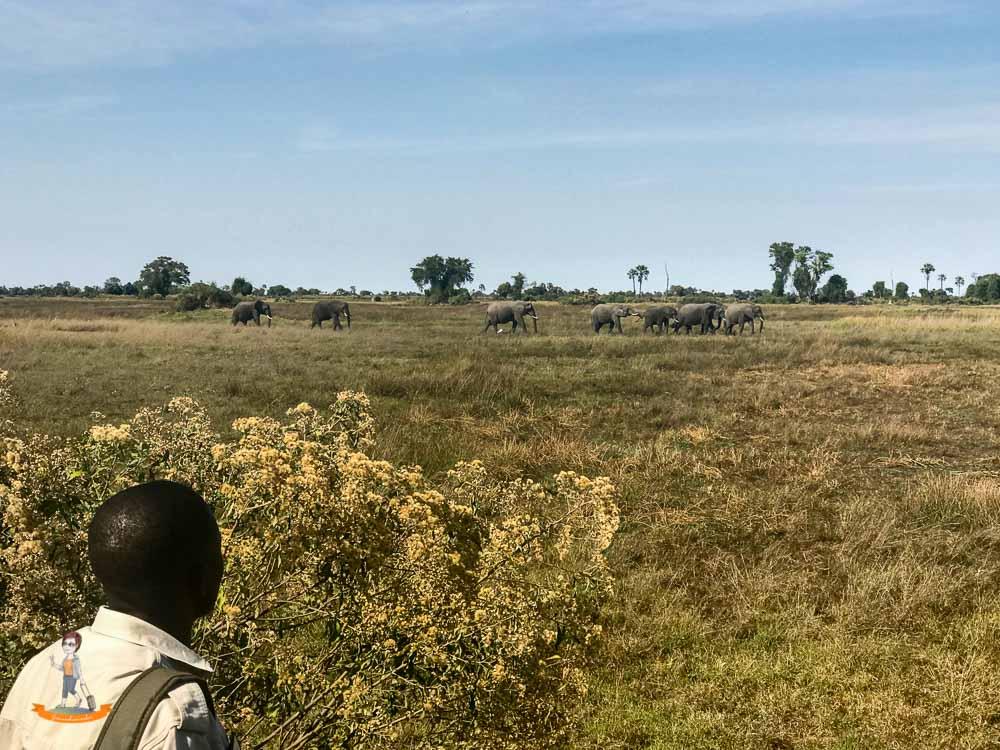 Okavango Delta Safari Elefanten