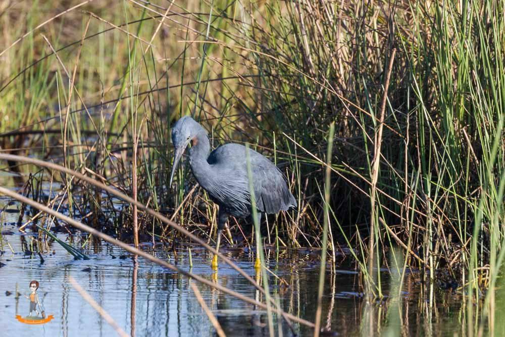 Okavango Delta Safari Vogel
