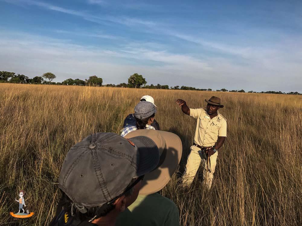 Okavango Delta Safari zu Fuss