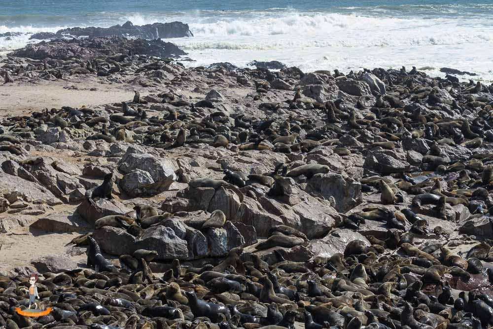 Swakopmund Cape Cross