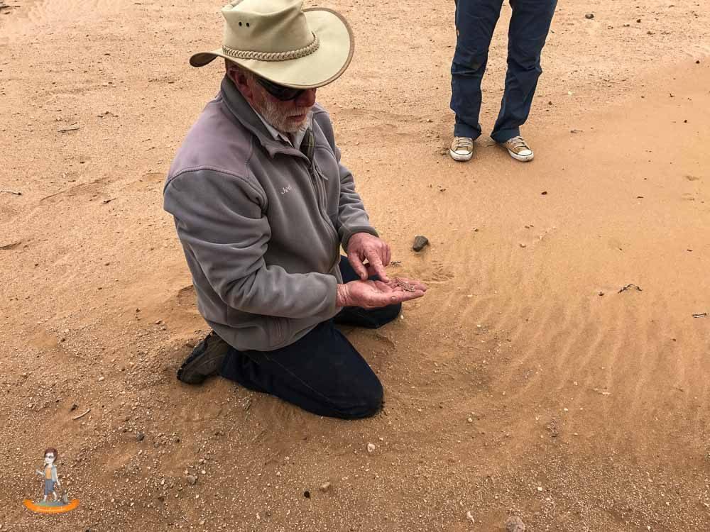 Swakopmund Living Desert