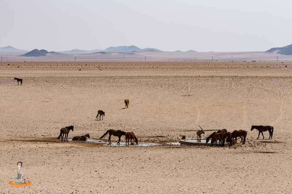 Wüstenpferde von Namibia