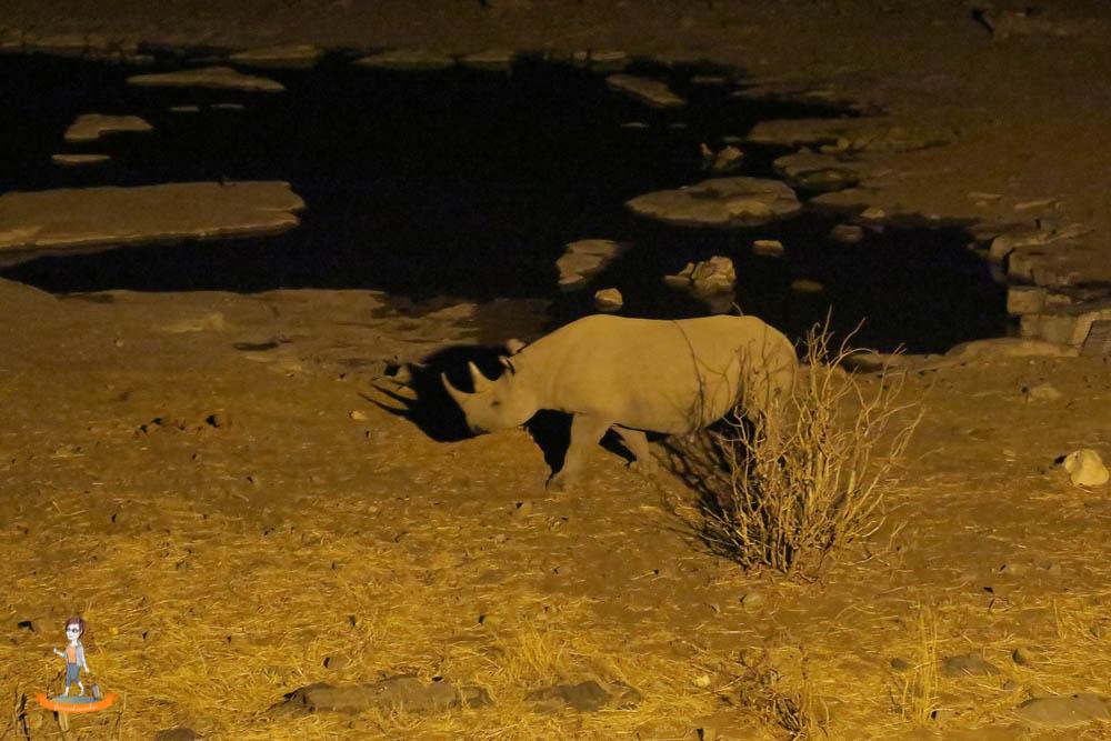 Etosha Nationalpark Namibia Nashorn