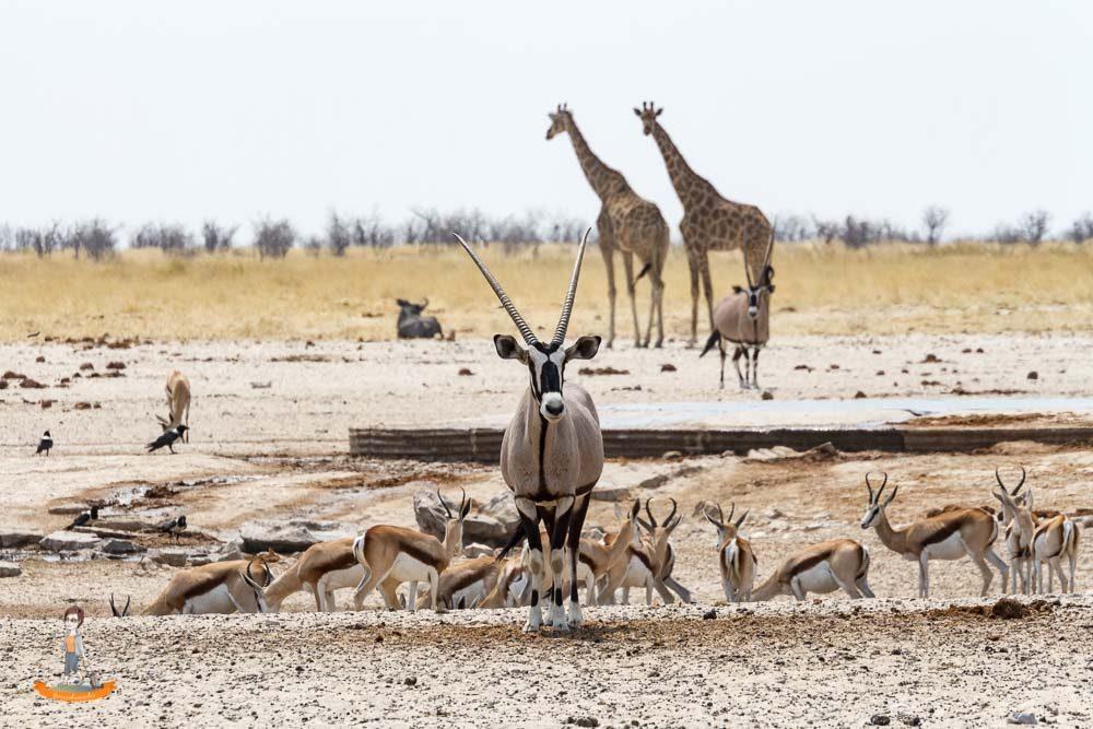 Etosha Nationalpark – Wissenswertes und Tipps