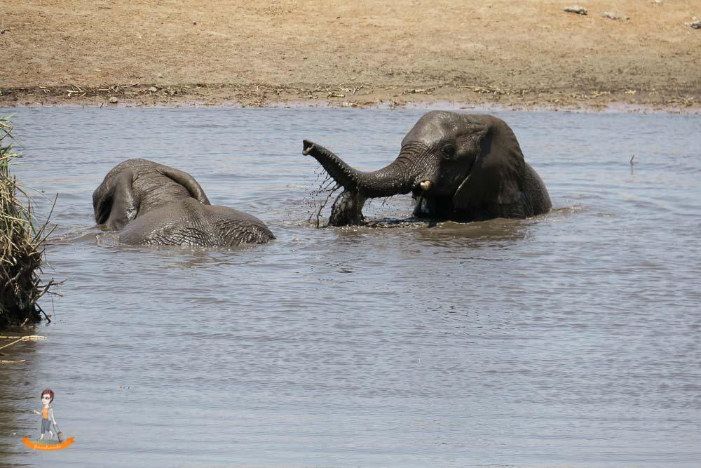 Etosha Nationalpark Namibia Elefanten