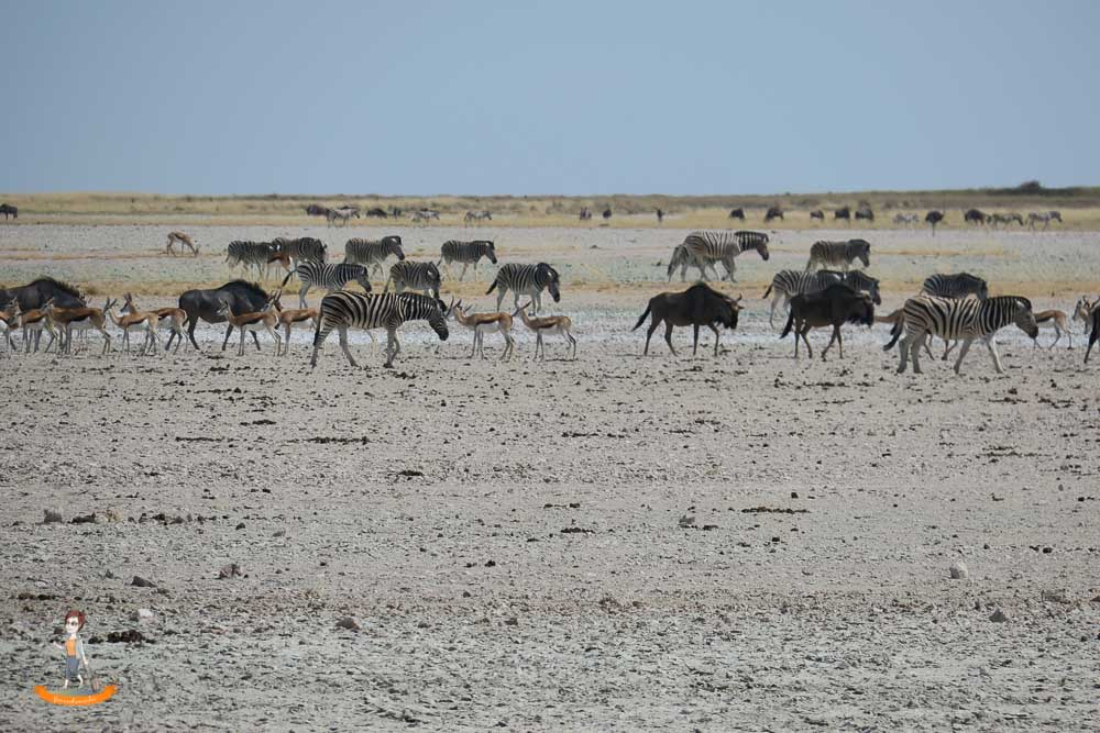 Etosha Nationalpark Namibia Zebras Gnus
