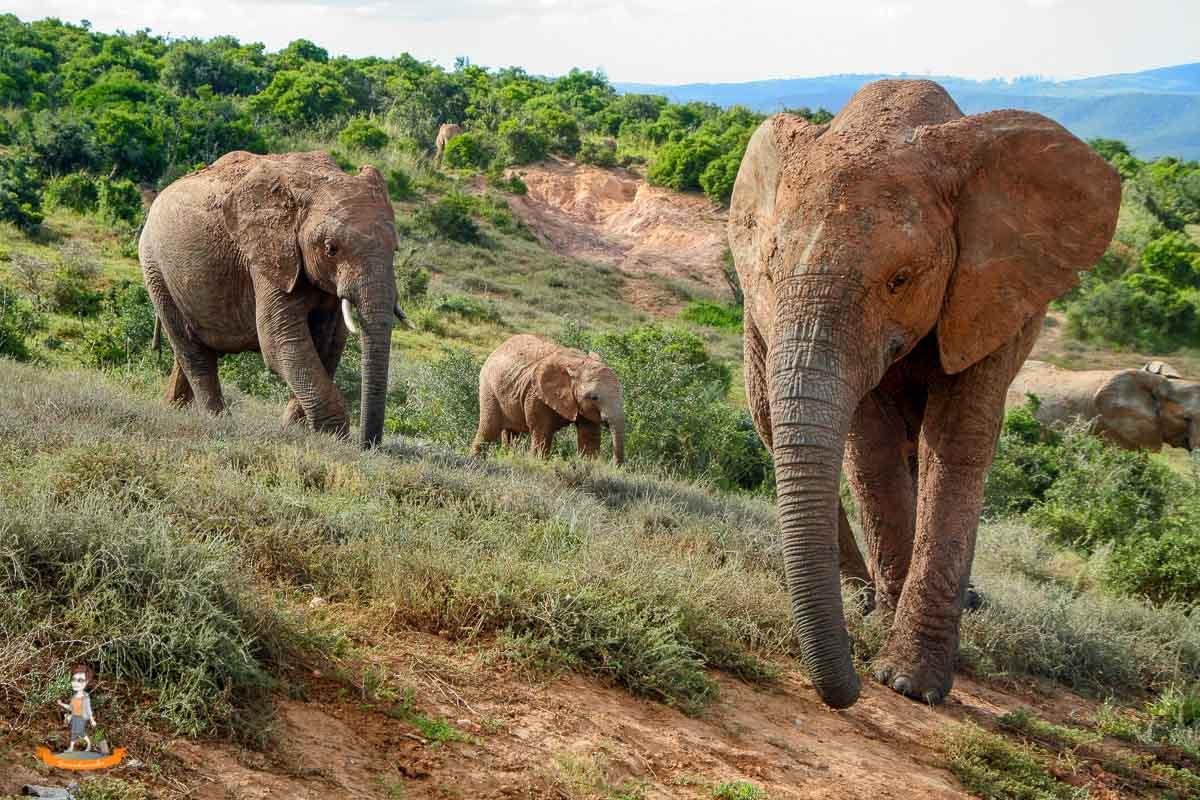 Reiseziel im Winter Elefanten