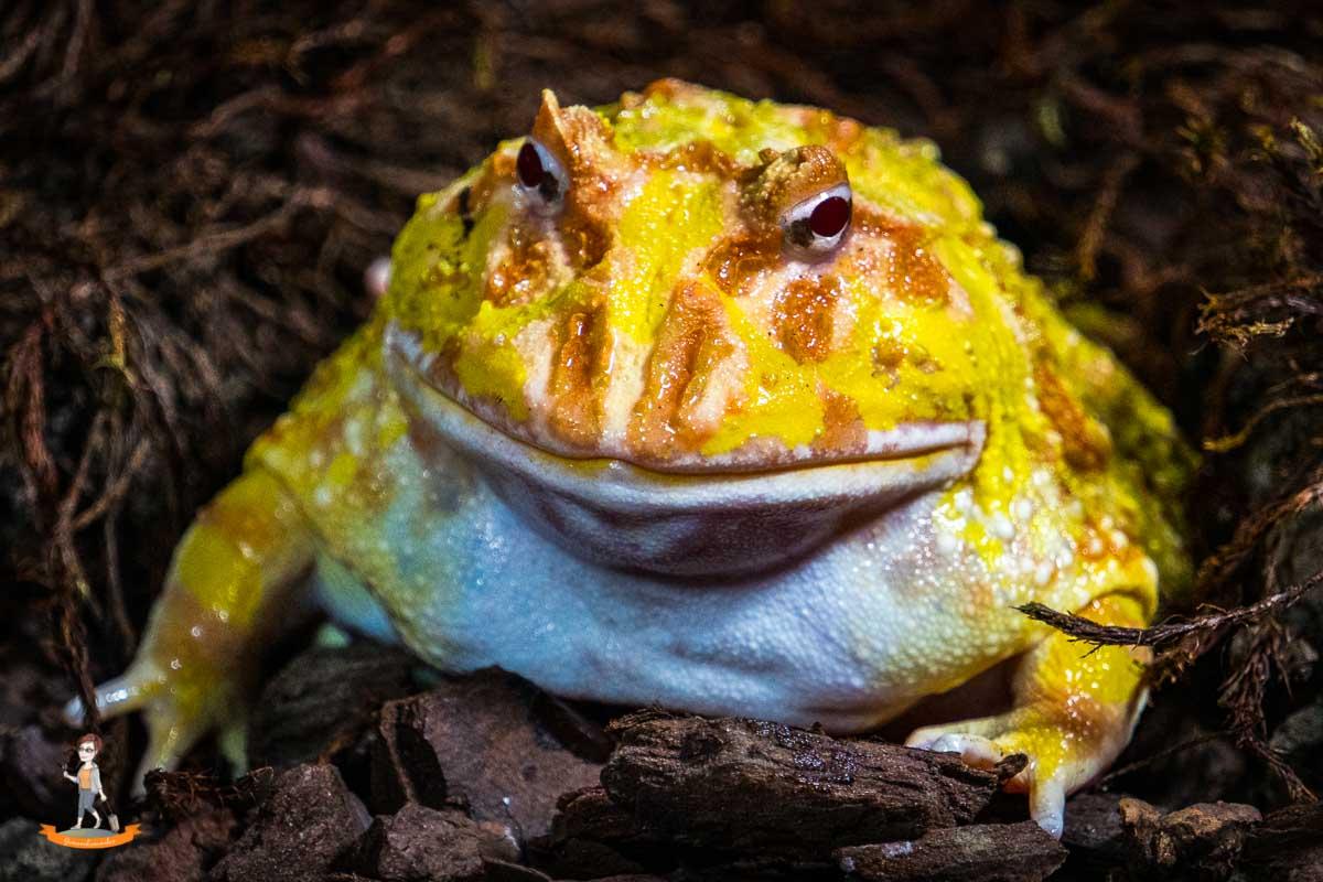 Fotoparade Frosch